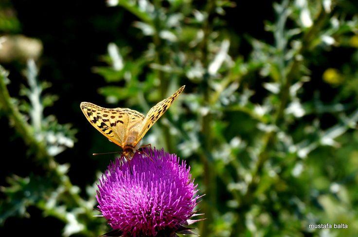 "Minicix Lİfe "" Butterfly "" - Sony Nex 6 -16-50mm  Miniciks Hayatlar ""Sandaly& Masa "" Minicix Life ""Chair &table"" #aps #kayseri #miniciks #minicix #apskayseri #insect #bahar #macro #micro #miniature #turkey #türkiye #benimobjektifim #mylens #minimal #mini #sony_nex #dağ #mountain #mustafabalta #böcek #offroad #sunset #bokeh #kayoff #panorama www.mustafabalta.net www.apskayseri.com"