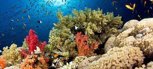 Wakatobi Island - MAESTRO Tour & Travel