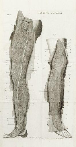 MASCAGNI, Paolo  (https://pinterest.com/pin/287386019947498474). Prodrome d'un ouvrage sur le systéme des vaisseaux lymphatiques... Siena: Vincent Pazzini Carli and son, 1784.