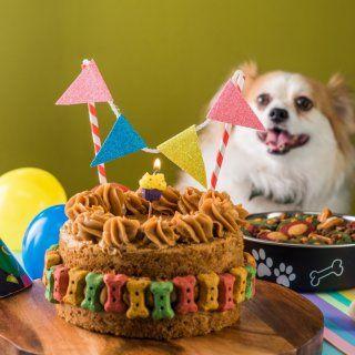 Homemade Dog Treats, Healthy Dog Treats, Happy Animals, Cute Animals, Dog Themed Parties, Dog Bakery, Mexican Party, Happy Dogs, Pet Shop