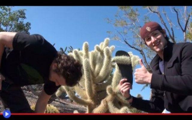 """L'ultima vittima del cactus più veloce del West Non è che la natura lo faccia di proposito, sia chiaro. E qui nemmeno siamo di fronte a una temuta situazione del tipo """"Chi estrarrà la spina dalla gamba, sarà re di Inghilterra."""" In primo luogo, per #piante #ambiente #deserto #cactus"""