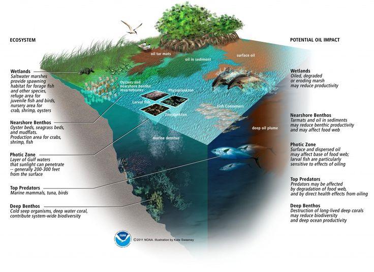 25+ Best Ideas about Deepwater Horizon Oil Spill on ...