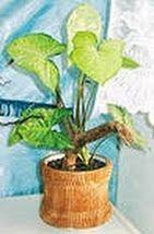 идеи для украшения цветочных горшков, картон, крафт-бумага, украшение горшков, украшение горшков своими руками, украшение цветочных горшков,...
