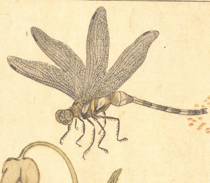 Butterfly (Chō); Dragonfly (Kagerō or Tonbo), from the Picture Book of Crawling Creatures (Ehon mushi erami), detail3
