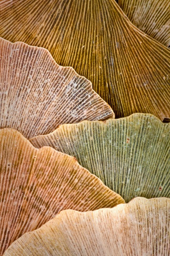 Ginko leaves | SkinSins Inspiration