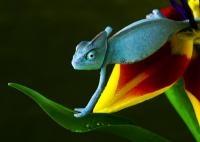 EOL es un proyecto internacional que pretende recopilar información sobre todas las especies conocidas en la Tierra