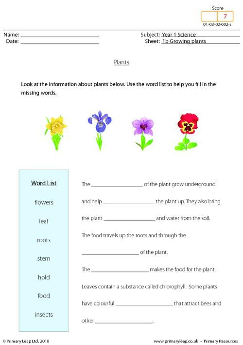 Growing plants unit. Use the word bank to complete the sentences about  plants.