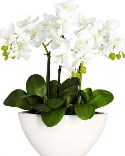 Белые орхидеи в горшках, фото 24