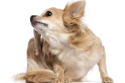Remedies for Arthritis in Dogs: Glucosamine, Chondroitin Sulfate, Steroids, and NSAIDs | petMD
