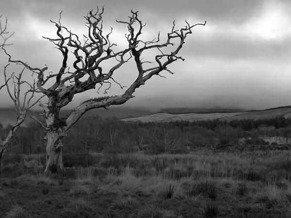 An image of a very bare tree located in Kerry, Ireland.