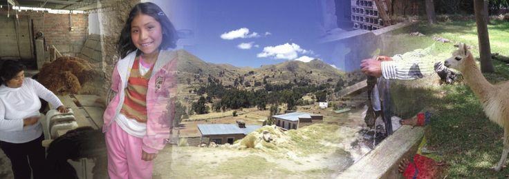 Peru #Alpaca #Landscapes