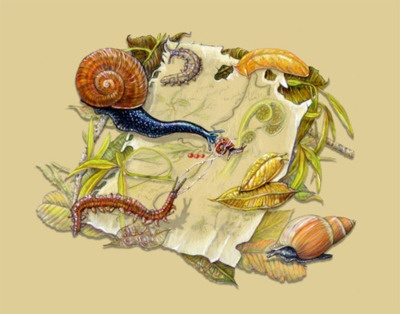Science art: New Zealand Invertebrates