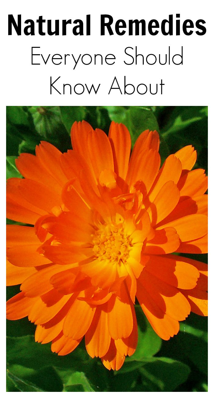 Natural Remedies Everyone Should Know About Calendula