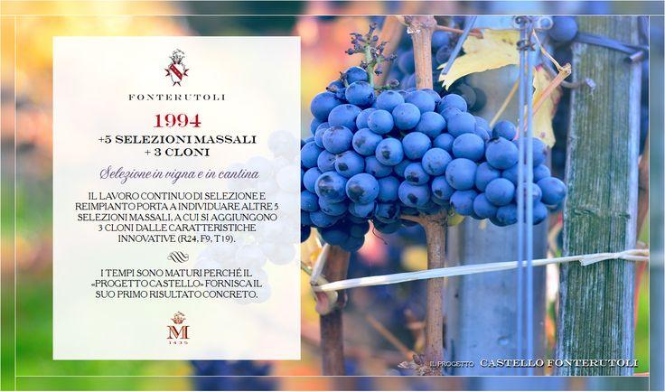 Il Progetto Castello di Fonterutoli prosegue il proprio percorso nell'innovazione attraverso la selezione e il reimpianto di nuovi selezioni massali e cloni. @marchesimazzei #fonterutoli #marchesimazzei #wine #tuscany