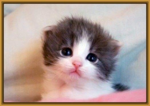 Resultado de imagen para fotos de gatos bebes tiernos