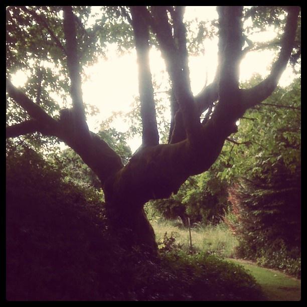 This tree lives at my house. RL
