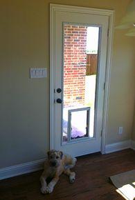 Glass door insert w/ dog door