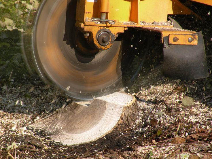 minneapolis, stump grinding, stump removal, stump grinder, tree stump removal, tree stump grinding