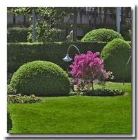 Ideas for a beautiful lawn.