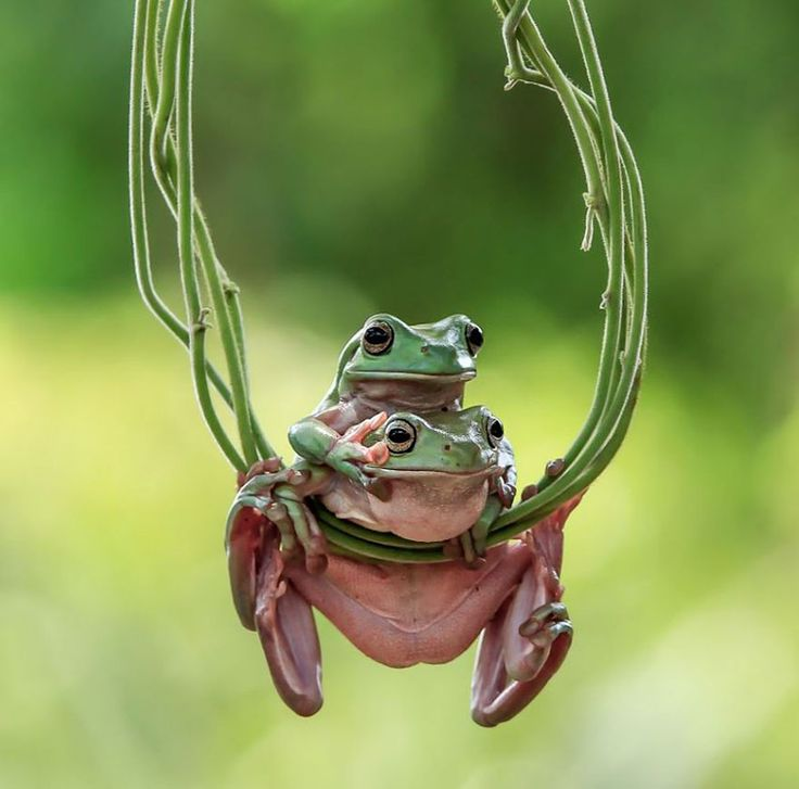 This Photographer Photographs Frogs Like You've Never Seen Before (10+ Pics)