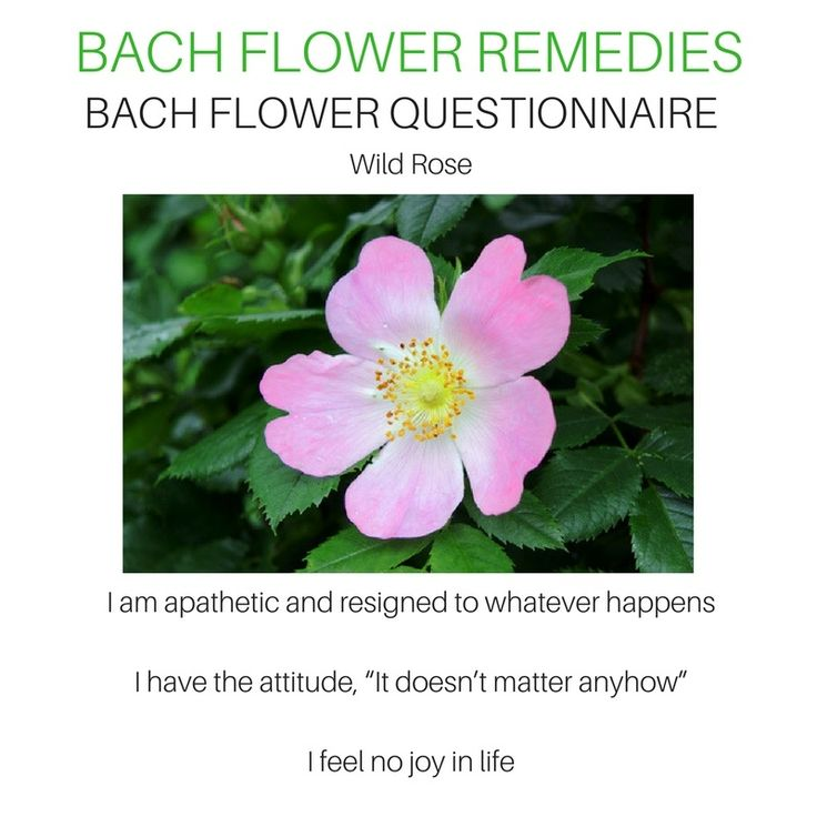 Wild Rose In 2020 Flower Remedy Flower Therapy
