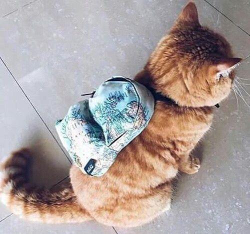 Kittengarden