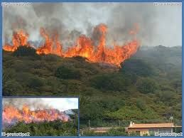Con los incendios de bosques se pierde la parte de la biodiversidad.