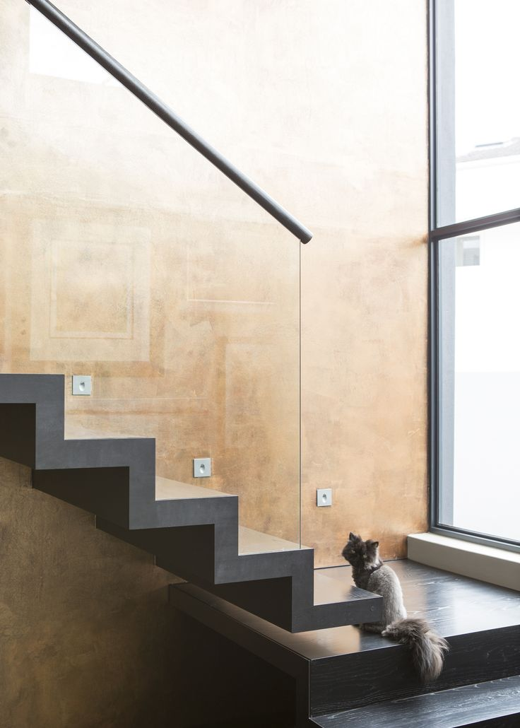 Stair case in double volume - with cat