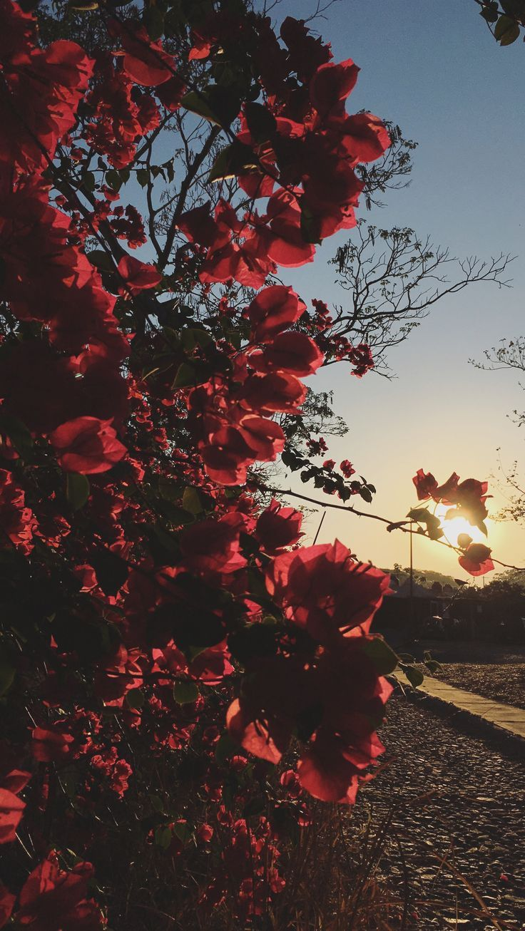 rote Blumen #Liebe   – { flowers & florals }