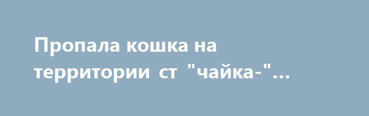 """Пропала кошка на территории ст """"чайка-"""" сектор г.Дубна http://poiskzoo.ru/board/read28923.html  POISKZOO.RU/28923 с .. августа неизвестна судьба кошки. Последний раз была на .. секторе """"Чайки-.."""", возможно сильно напугана агрессивным котом, заблудилась на Чайках и не может вернуться. Достаточно крупная, равномерно серая, полосы слегка проступают на хвосте, похожа на тяжеловатую русскую голубую. Глаза жёлто-зеленые. Стерилизована. Очень ласковая и разговорчивая. Буду благодарна за любую…"""