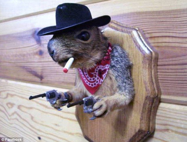 I want this for Bret's man cave :) Gun slinging taxidermied squirrel.