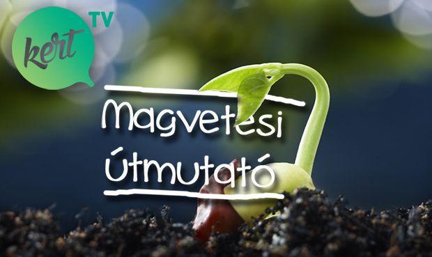 MAGVETÉS LÉPÉSRŐL-LÉPÉSRE - VIDEÓ MÁRKKAL - kert.tv