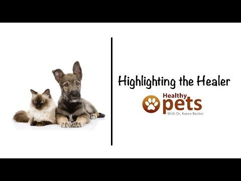 Integrative Pet Care Expert, Dr. Karen Becker - Mercola.com, pinning to watch later