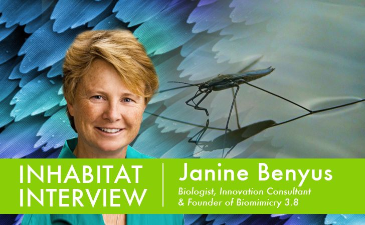 VIDEO: Inhabitat Interviews Janine Benyus, Biologist and Founder of The…