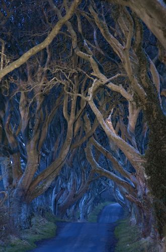 """Wow - stunning dark beauty - The Dark Hedges - N. Ireland.  Michele Erdvig says: """"The timeless aura is evocative of a Tolkienesque landscape."""" Indeed."""