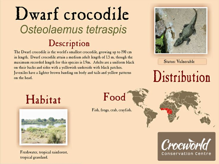 Crocworld in Scottburgh - crocodiles, snakes (reptiles) and animal farm in a conservation area that looks like botanical gardens.