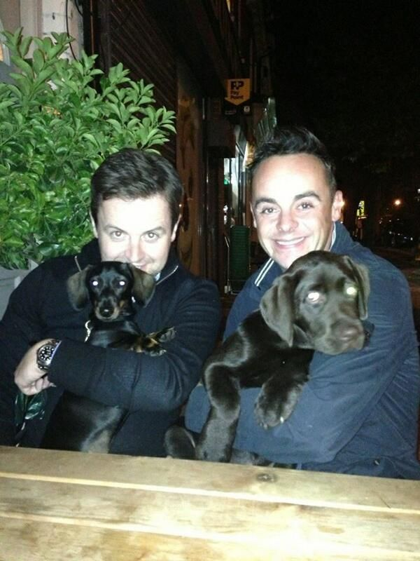 the boys with their puppies rocky and hurley TOO CUTE