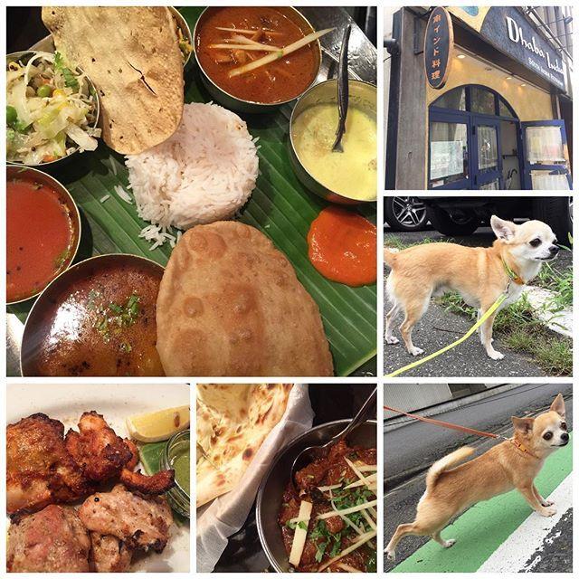 無性にカレーが食べたくなって、有名な #ダバインディア へ。  色んなスパイスが凄ーい。  #スムースコートチワワ #スムチー #スムチ #チワワ #chihuahua #chihuahualove #愛犬 #犬バカ部 #instadog #cutedog #cute #doglovers #ilovemydog #instapet #dogstagram #dogsofinstagram #愛しい #food #foodporn #yummy #八重洲 #南インド料理 #カレー #インド料理 #ランチ #lunch
