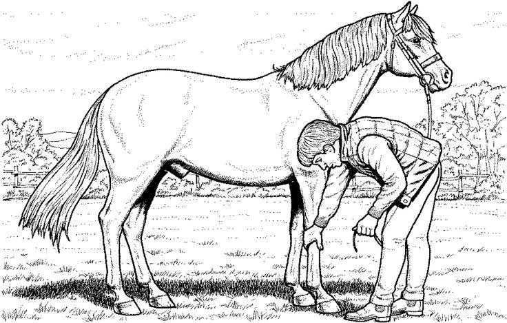 pferde ausmalbilder ausdrucken   ausmalbildkostenlos.com   Pinterest