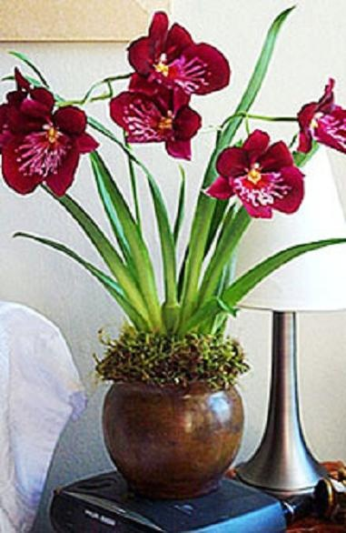 29 Best Images About I Love Orchids On Pinterest Lady