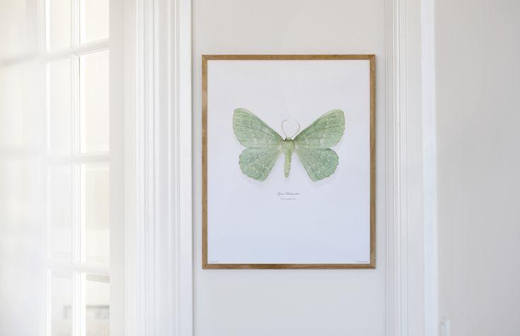 Grøn Birkemåler er let at kende på sin ensartede grønlige grundfarve på både for- og bagvinger. Den sarte grønne farve brydes af uskarpe og hvide bølgelinjer, hvilket er med til at skabe et flot og dæmpet mønster.
