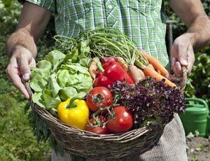 Planning Planting And Maintaining A Vegetable Garden Oklahoma Gardening Forum Gardenweb