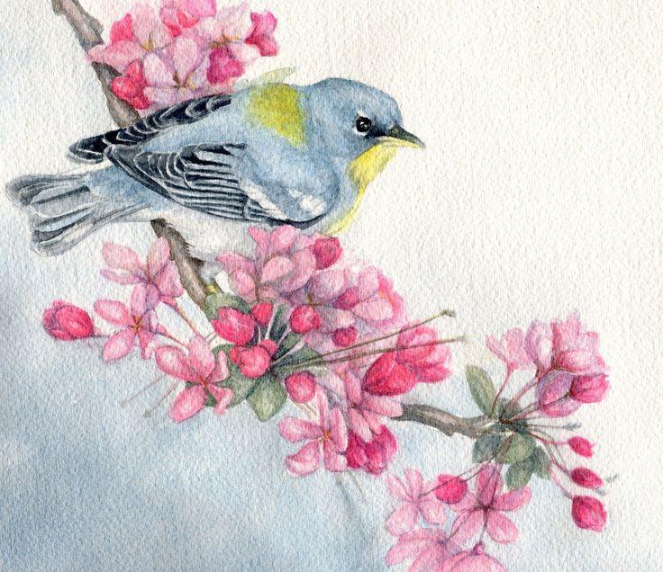 "watercolor painting of birds | Original watercolor bird painting northern parula warbler 7"" x 8"""