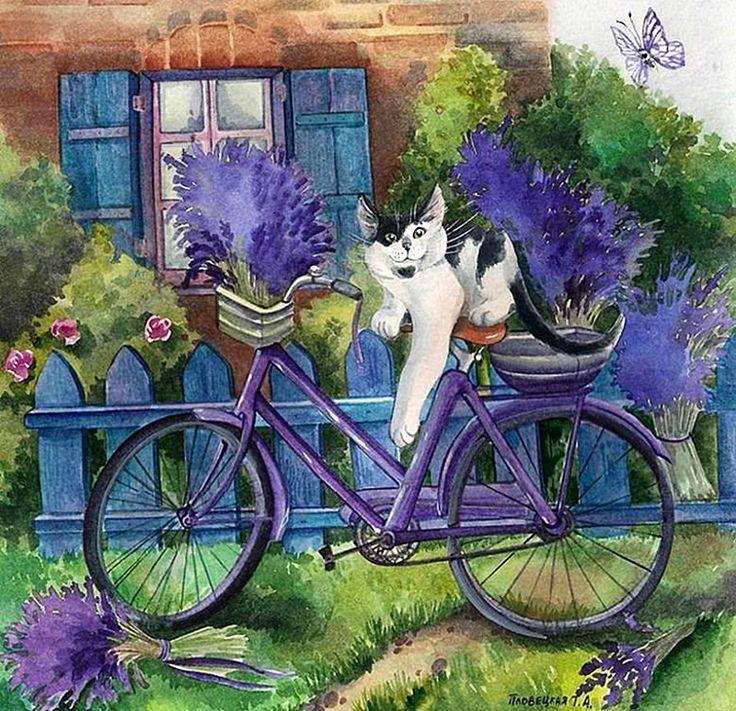 Кеша в Провансе с велосипедом..jpg