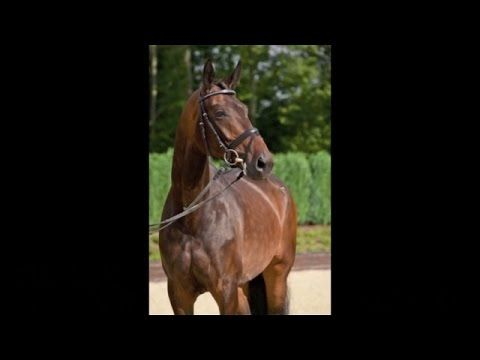 www.sporthorses-online.com 2010 Dressage mare for sale