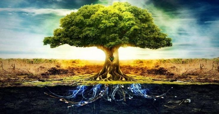 Podľa keltskej astrológie má každý človek typické vlastnosti rôznych stromov. Zistite, aký strom prislúcha vám podľa dátumu narodenia.