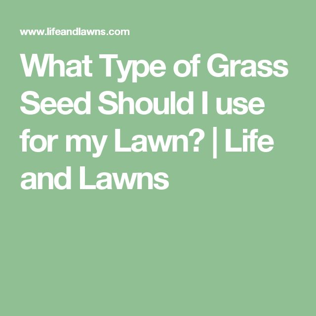 What Type of Grass Seed Should I use for my Lawn? | Life and Lawns