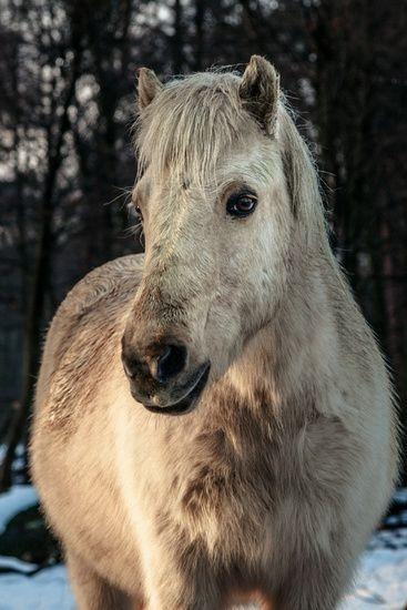 Prachtige foto's voor aan de muur in huis of op kantoor. Bestel Portret van een paard als print. Kies zelf de maat en het materiaal. Snel geleverd, hoge kwaliteit.