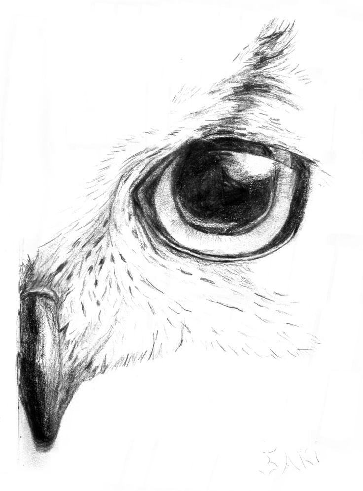 A church owl looking attentively. By Sari