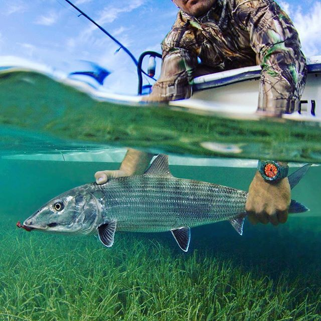 Best Fly Fishing Combos 2021 Beginners Buying Guide Fly Fishing Fish Saltwater Fishing